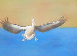 Judy Hollinshead - Pelican Coming