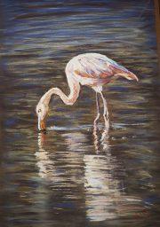 Kim Morgan - Galapagos Flamingo